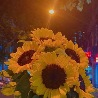 唯美治愈花朵静物